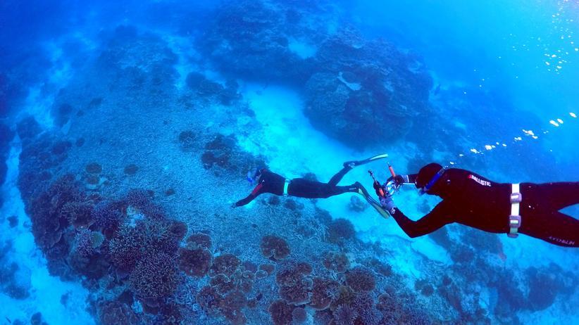 Unesco-Weltnaturerbe: Australien versagt beim Schutz des Great Barrier Reef