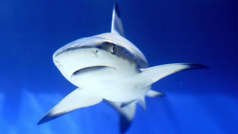 Haie: Haie, eigentlich voll lieb