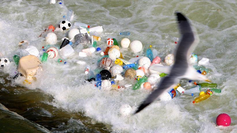 Seevögel Plastik