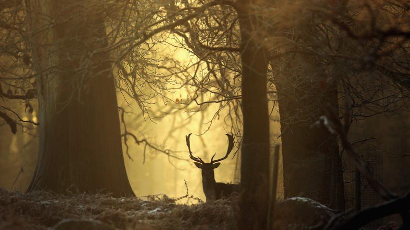 Wissen, Waldsterben, Wald, Studie, Pflanze, Abholzung, Klima, Landwirtschaft, Brand, Schädling, Skandinavien, Russland, Nordamerika