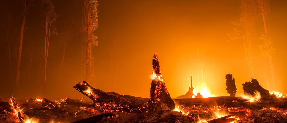 Palmöl Pflanzenöl Indonesien Brandrodung Regenwald