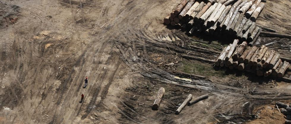 Illegales Lager im brasilianischen Regenwald