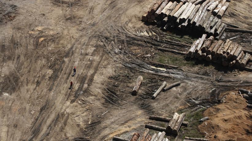 Umweltschutz: Rodungen im brasilianischen Regenwald nehmen zu