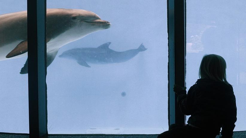 Delfine im Nürnberger Zoo: Delfine im Nürnberger Tiergarten.