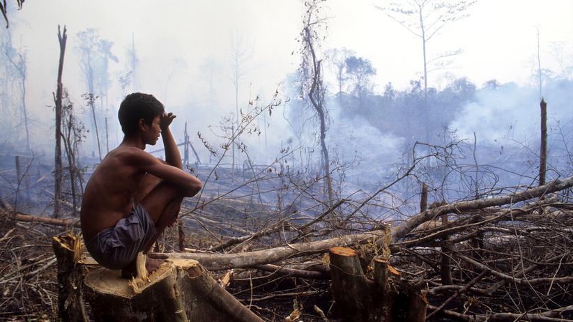 Regenwald:  Der Dschungel brennt