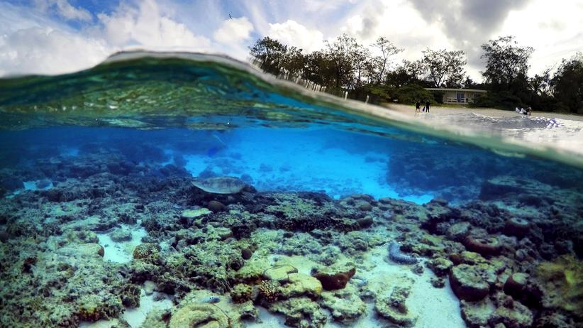 """Australien: """"Der Klimawandel tötet das Barrier Reef"""""""