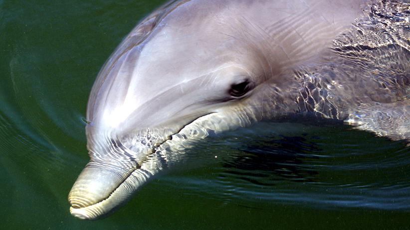 Zoologie: Das Delfin-Dreamteam