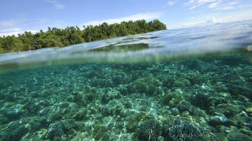 Korallenriff: Hier fischen sie mit Dynamit