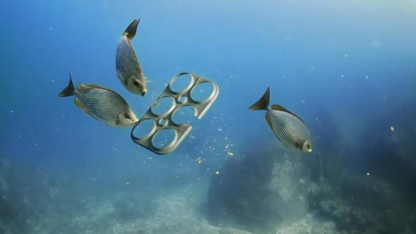 Plastikmüll: Dieser Sixpack ist zum Anbeißen