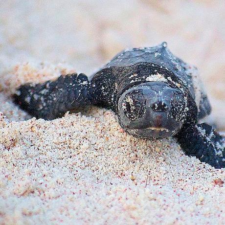 World Turtle Day: Wimmeln, um zu überleben