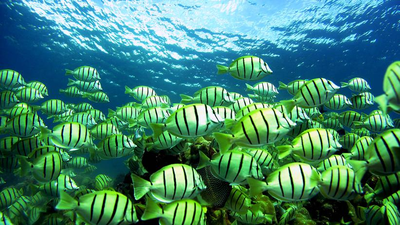 Hawaii: Obama schafft größtes Naturschutzgebiet der Erde