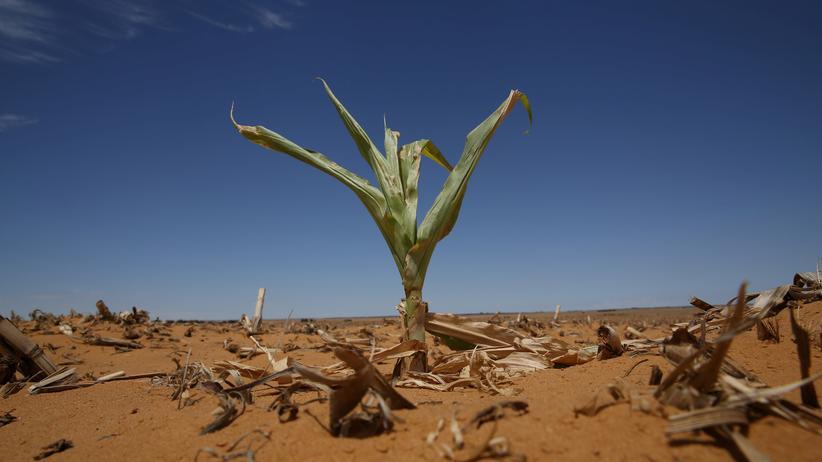 Klima: Juli 2016 bricht historischen Hitzerekord