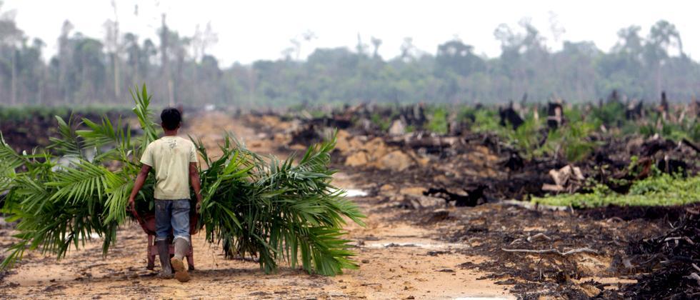 Palmöl Regenwald Plantagen Indonesien