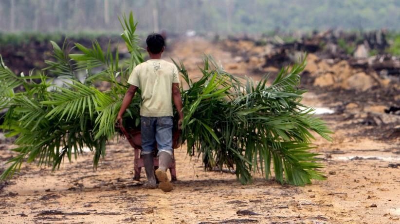 Palmöl: Eine Palmöl-Plantage auf Sumatra in Indonesien.