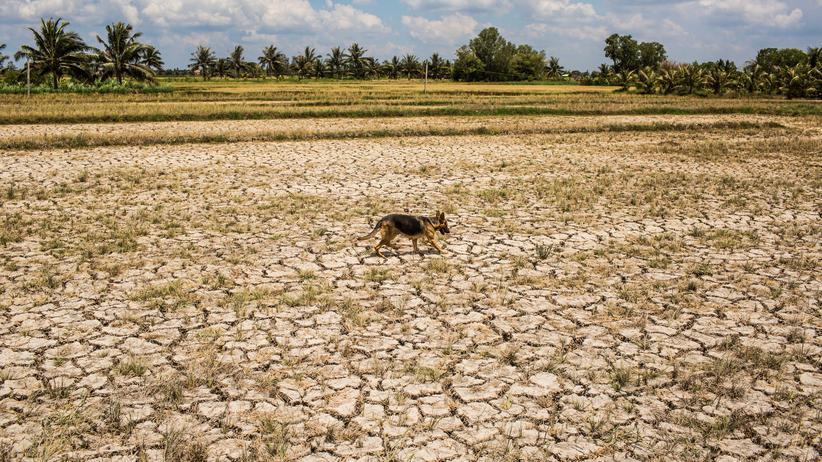 Weltrisikobericht: Wie die Dürre zur Katastrophe wird