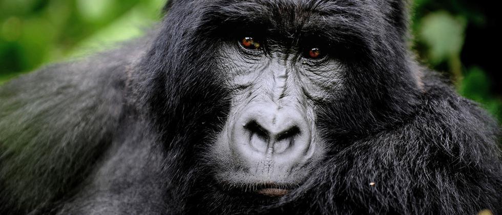 Artenschutz Tierarten Thema