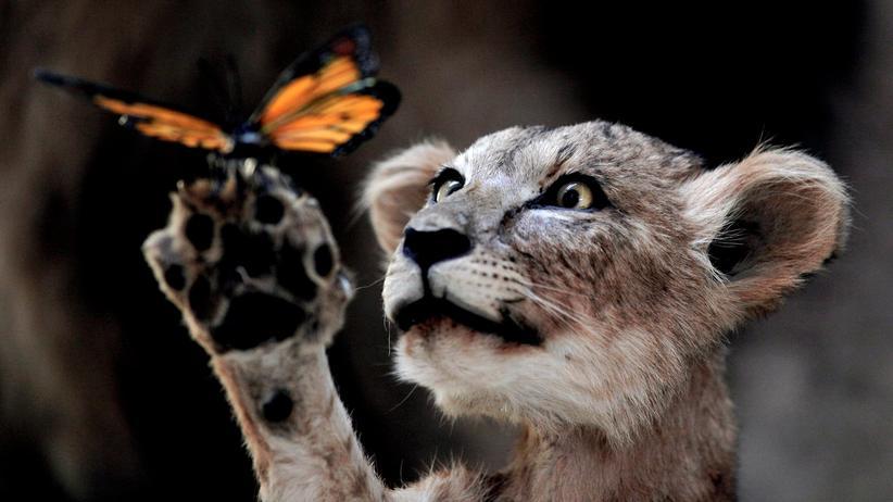 Artenschutz Konferenz Löwe Wildtier Tierschutz