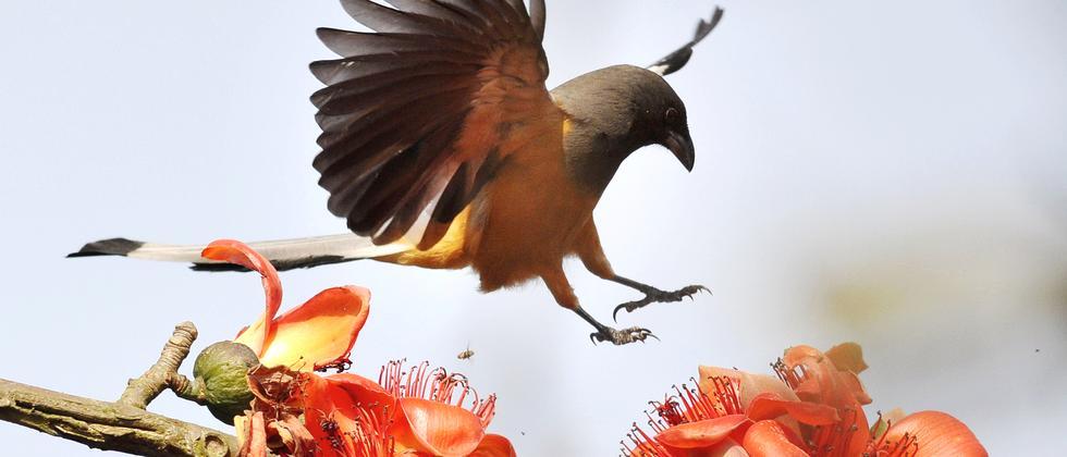 naturschutz-erde-wildnis-landflaeche-naturschutzkonferenz-tiere