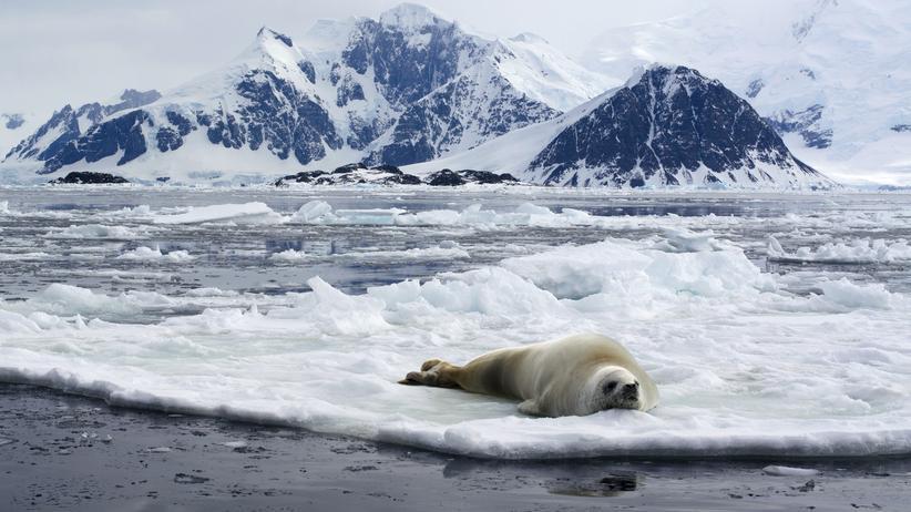 Antarktis: Rossmeer? Nie gehört.