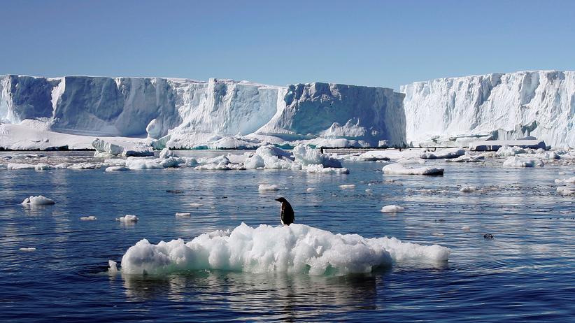 Von dem Schutzgebiet im Rossmeer sollen Wale und und Pinguine profitieren.