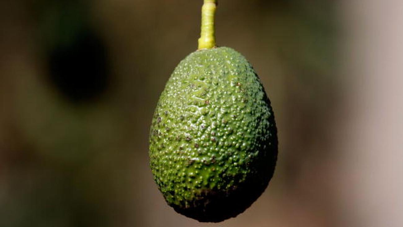 avocado das lieblingessen der gegenwart zeit online. Black Bedroom Furniture Sets. Home Design Ideas