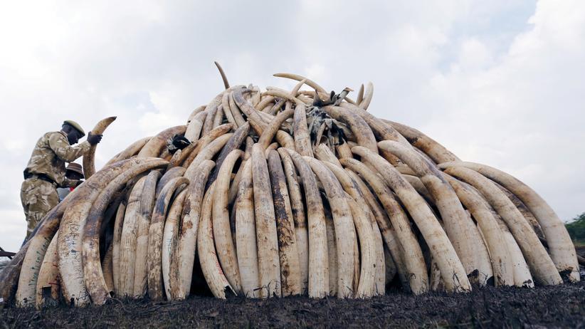 Johannesburg: Elfenbeinmärkte sollen geschlossen werden
