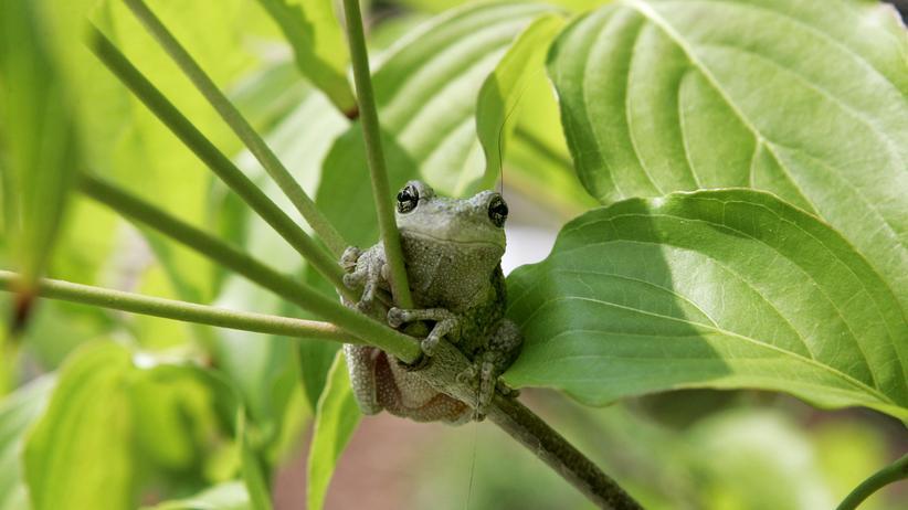Living Planet Report WWF Frosch Naturschutz Tierschutz Umweltschutz