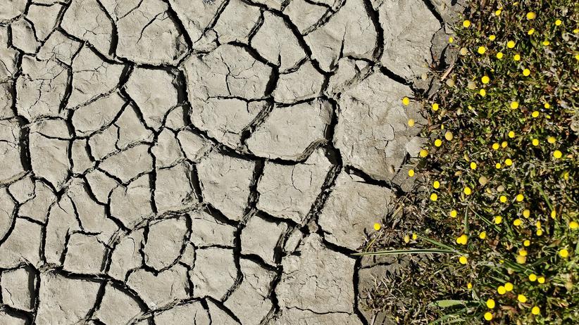 Klimawandel: Von Stürmen vertrieben