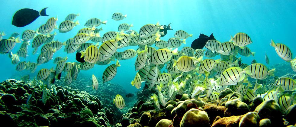 Korallen Klimawandel Riffe Meeresbiologie Hawaii
