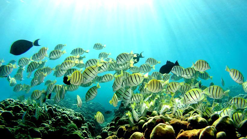 Klimawandel: Super-Korallen trotzen dem bleichen Tod