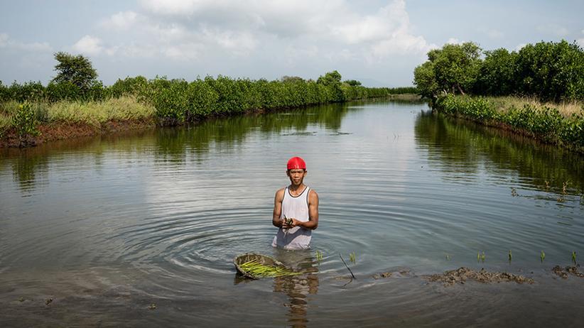 Nachhaltigkeit: Mangroven sterben für billige Shrimps