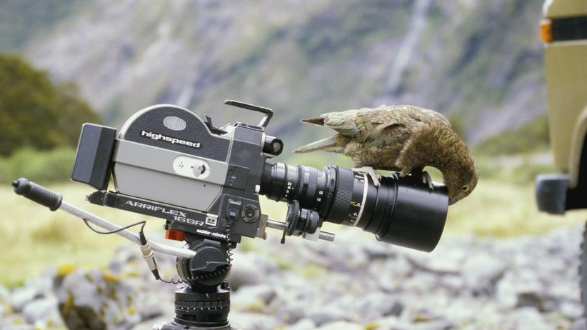 tiere-kamera-tierfilme-natur-dokumentationen-teaser