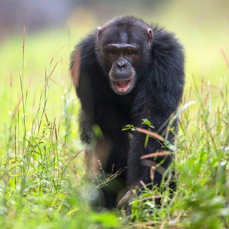 Artenschutz: Die Letzten ihrer Art