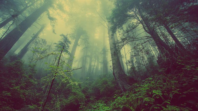 Wälder: Gezüchtet, gefällt, verheizt