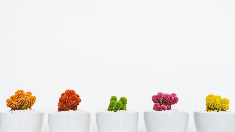 Botanik: Zierpflanzen brauchen das tropische Klima des Raumes. Sie wachsen nicht nach draußen, sie wachsen Richtung Licht.
