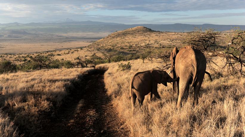 Elefanten Nashörner Wilderei Afrika Kenia Überwachung High-Tech