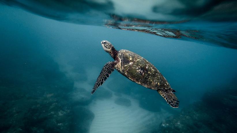 Ozeane: Wer die Meere rettet, rettet die Welt