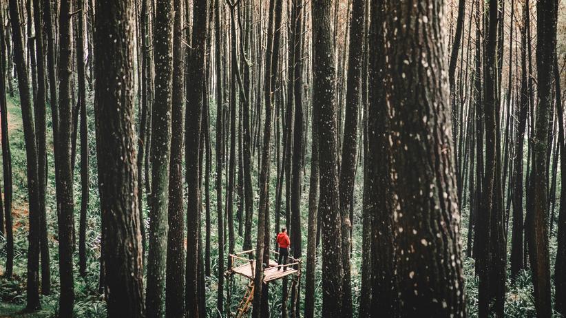 Wald Bäume Tiere Erforschung