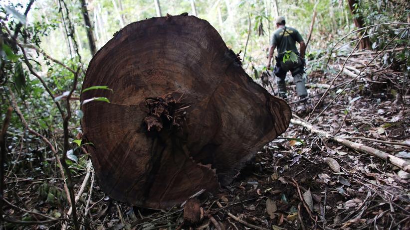 Brasilien: Das Schutzgebiet im Jamanxim-Nationalpark soll mit dem Gesetzesentwurf des brasilianischen Präsidenten um mehr als ein Viertel verkleinert werden.