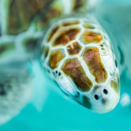 Plastikmüll: Nie wieder ohne Beutel zu Aldi