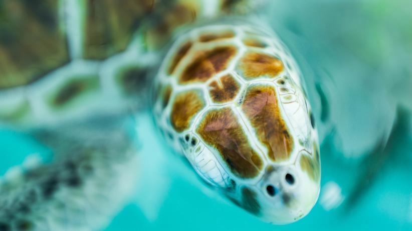 Meeresschildkröte Plastik Plastiktüten Müll Ozeane Sea Turtle