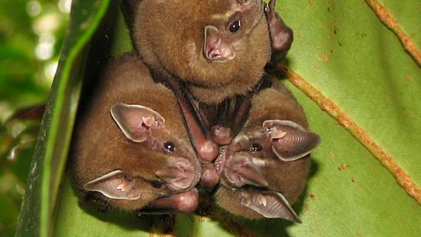 Fledermaus-Quiz: Good Night? Bat Night!