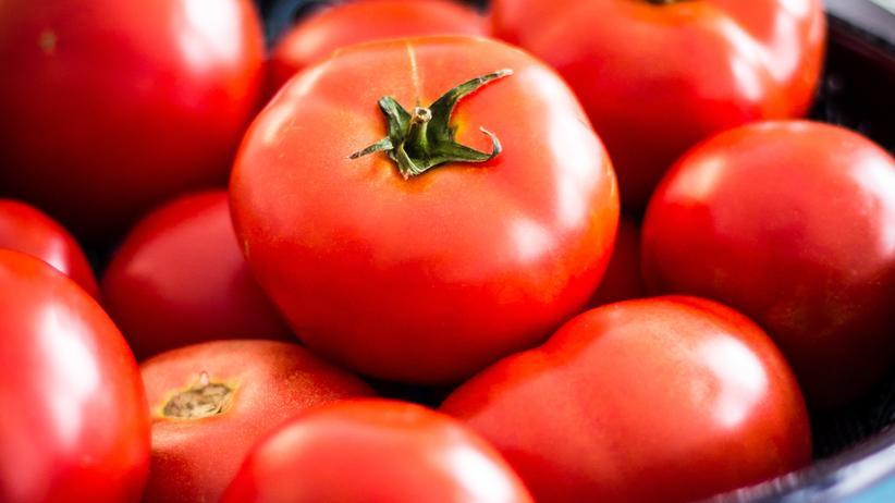Tomaten Biotomaten Lebensmittel Holland Gemüse
