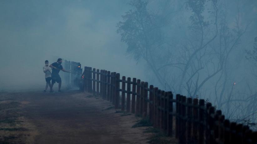 Waldbrände: Feuer und Verzweiflung