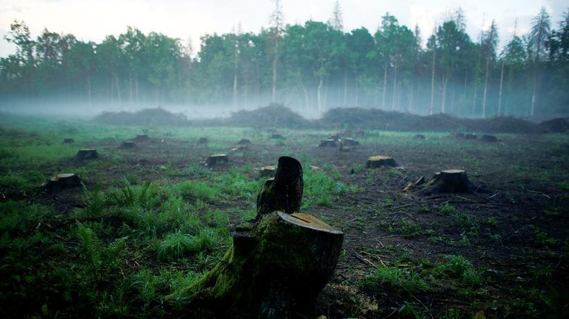 Białowieża-Nationalpark: Der Kampf um einen der letzten Urwälder Europas