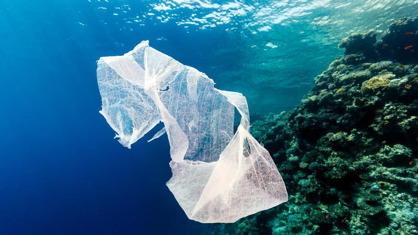 Bedrohte Riffe: Plastik macht Korallen krank