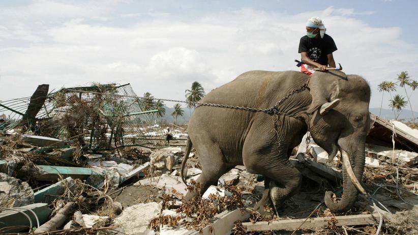 Naturkatastrophen: Indonesien – Überlebende des Tsunamis räumen gemeinsam mit Elefanten auf. Allein in dem Inselstaat starben damals mehr als 160.000 Menschen.