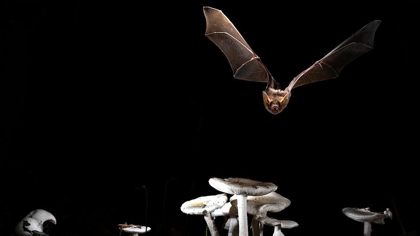 Altern: Ewig junge Fledermäuse