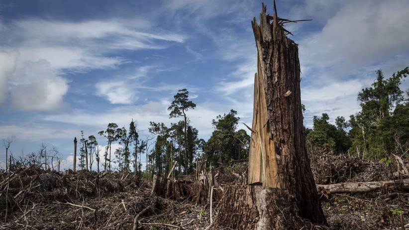 Palmöl: Für die Palmölplantagen werden große Flächen Regenwald gebrandrodet.