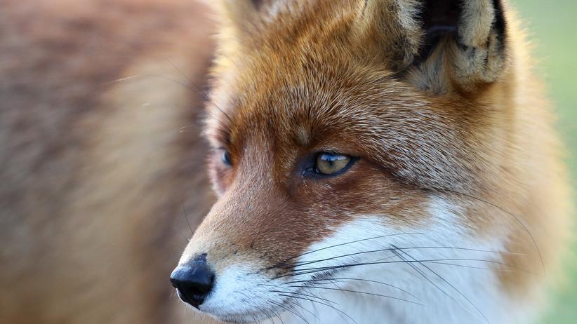 Tierschutz: Ist es okay, Pelz zu tragen?